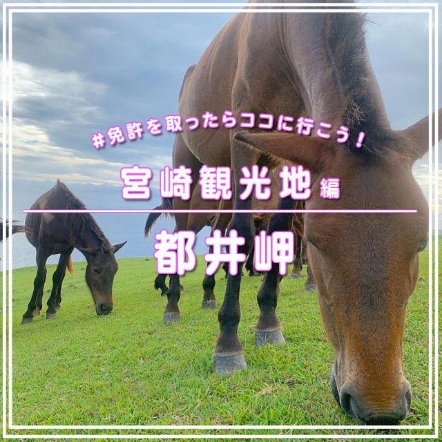 【免許を取ったらここへ行こう!都井岬】  免許を取ったら必ず行って欲しい宮崎観光地🏝 今日は珍しいオススメな観光地❤️💛💜    宮崎県串間市にある 「都井岬(といみさき)」では、 草原と海原を背景に、野生の馬たちが草をはむ姿を観察できます🐴  人の手がかかっていない貴重な野生馬、「御崎馬」有名です🐴🐴🐴  免許を取ったらドライブしながら、是非遊びに行ってみてください🏝🚗    📍都井岬📍 宮崎県串間市大字大納 開門時間 : 4~9月 8:30~18:00 10~3月 8:00~17:30 駐車場 : 車1台400円、バイク1台100円   \ 免許取るなら楽しくなくっちゃ!/ 💁♀️💁💁♂️ 💁♀️💁💁♂️ 💁♀️💁💁♂️   #自動車学校 #車校 #教習所 #南九州教習所 #なんきゅー #車好き #宮崎自動車学校 #宮崎教習所 #宮崎 #免許 #宮崎ドライブ #宮崎高校生 #🔰 #筆記試験 #宮崎市 #ドライブ #宮崎観光 #宮崎ドライブ #宮崎観光地 #都井岬